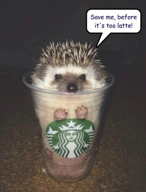 Save me, before it's too latte!