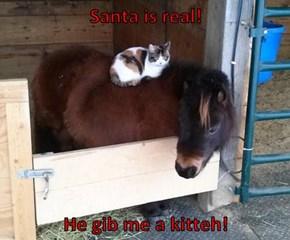Santa is real!   He gib me a kitteh!