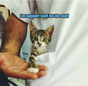 I'm support staff for the staff