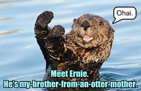 Meet Ernie.  He's my-brother-from-an-otter-mother.
