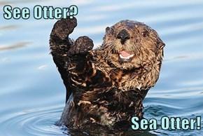 See Otter?  Sea Otter!