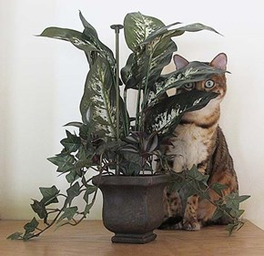My Little Jungle Cat
