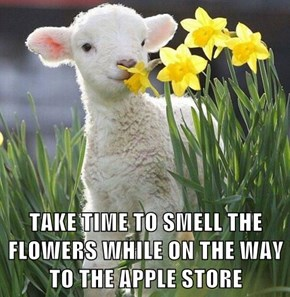 TAKE TIME TO SMELL THE FLOWERS WHILE ON THE WAY TO THE APPLE STORE