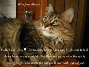 With Love Always..  Puddin 2001-2014 ♥ The Rainbow Bridge has a new bright star to look down from the sky at night.  She plays and purrs when the sun is shining bright, and awaits the day you'll meet with tears of joy!
