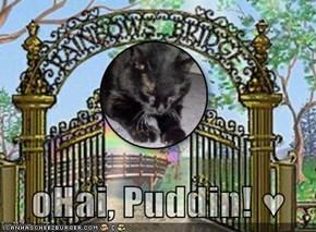oHai, Puddin! ♥