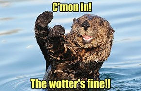 Just An Otter Day In Paradise