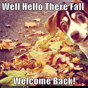 Well Hello There Fall  Welcome Back!