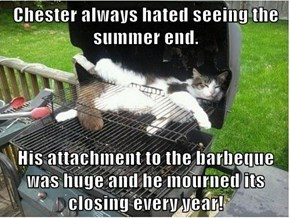 Chester always hated seeing the summer end.   His attachment to the barbeque was huge and he mourned its closing every year!