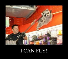 That Raccoon Has Never Been Happier