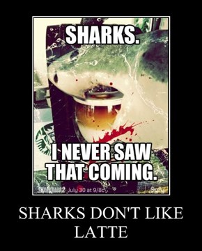 SHARKS DON'T LIKE LATTE