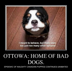 OTTOWA: HOME OF BAD DOGS.