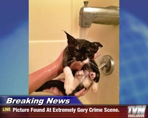 Breaking News - Picture Found At Extremely Gory Crime Scene.