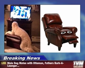Breaking News - Male Dog Mates with Ottoman, Fathers Bark-A-Lounger...
