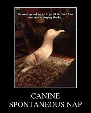 CANINE SPONTANEOUS NAP