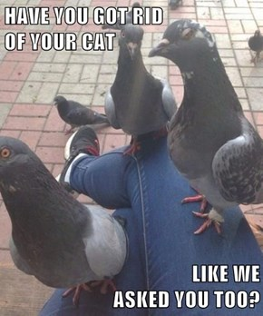 Pigeon Mafia Only Asks Once