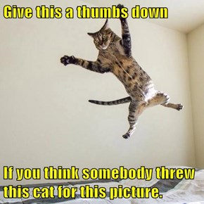 Give this a thumbs down  If you think somebody threw this cat for this picture.