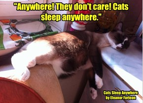 """Anywhere! They don't care! Cats sleep anywhere."""
