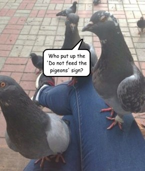 Who put up the 'Do not feed the pigeons' sign?