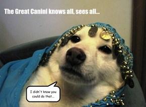 Canini