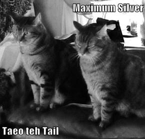Maximum Silver  Taeo teh Tail