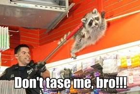 Don't tase me, bro!!!