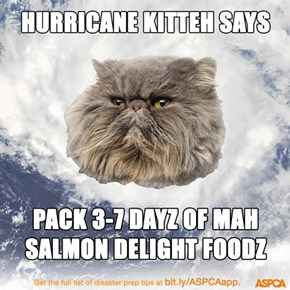 Let's Keep Our Pets Safe From Disaster!