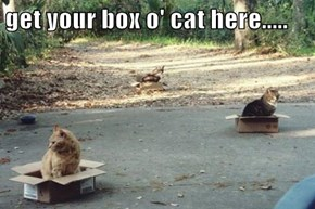 get your box o' cat here.....