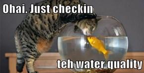Ohai. Just checkin  teh water quality