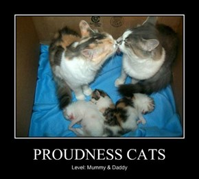 PROUDNESS CATS