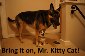 Bring it on, Mr. Kitty Cat!