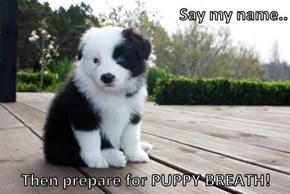Say my name..  Then prepare for PUPPY BREATH!