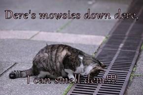 Dere's mowsies down dere,  I can smell dem!!!
