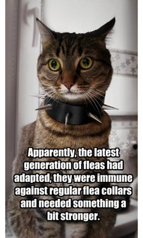 Apparently, the latest generation of fleas had adapted, they were immune against regular flea collars and needed something a bit stronger.