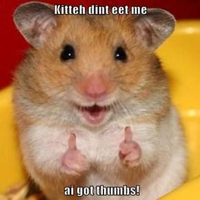 Kitteh dint eet me   ai got thumbs!
