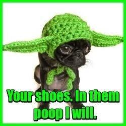 Yodog