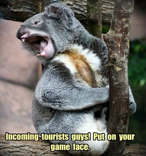 Incoming  tourists  guys!  Put  on  your game  face.