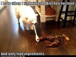 I hate when I walk into the kitchen for food  And only find ingredients.