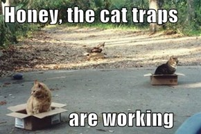 Honey, the cat traps                   are working