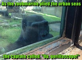 "As the zoobmarine plied the urban seas  the captain called, ""Up, gorillascope!"""
