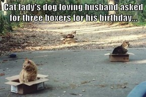 Cat lady's dog loving husband asked for three boxers for his birthday...