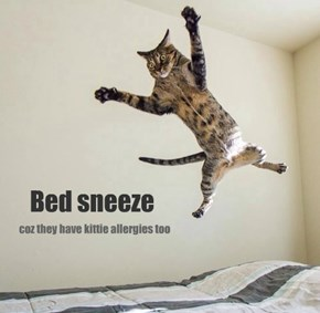 Stoopy bed!