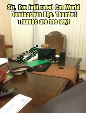 Sir,   I've  infiltrated  Cat  Wurld Dominashun  HQs.  Thumbs!  Thumbs  are  the  key!