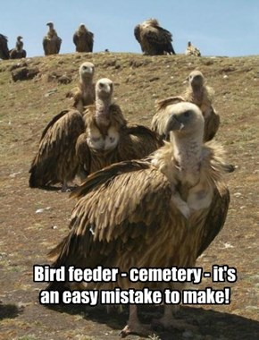 Bird feeder - cemetery - it's an easy mistake to make!