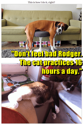 """""""Don't feel bad Rodger. The cat practices 16 hours a day."""""""