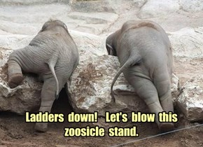 Ladders  down!    Let's  blow  this  zoosicle  stand.