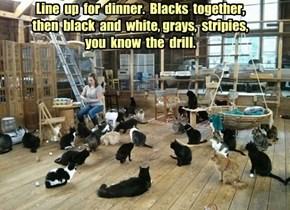 OCD Crazy Cat Lady