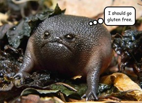 Can Toads Get Celiac's?