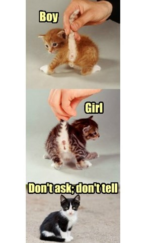 Kittens demand gender neutrality!