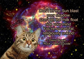 Don't let the Sun blast            your shadow            Don't let the milk float           ride your mind            You're so natural,            religiously unkind.