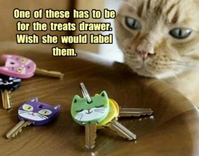 A common human fail